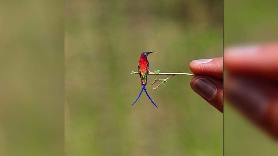 உலகின் மிக சிறிய ஹம்மிங் பறவை; வைரலாகும் புகைப்படம்!