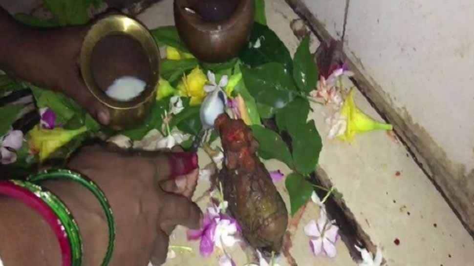 பக்தர்கள் வழங்கும் பாலை உட்கொள்ளும் கயாவில் உள்ள நந்தி சிலை!