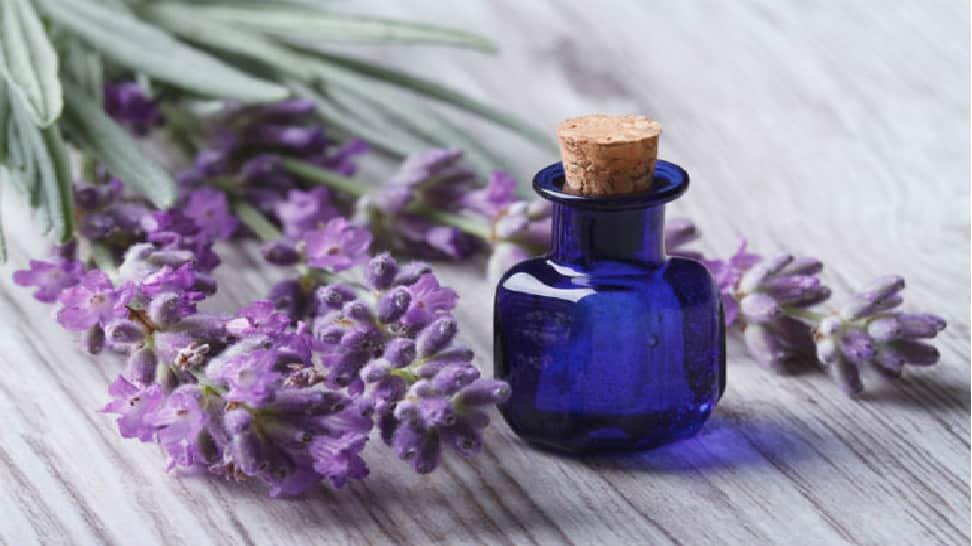 லாவெண்டர் எண்ணெய் (Lavender Oil)