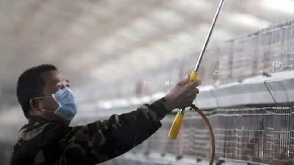 உலகில் முதல் முதலாக சீனாவில் மனிதருக்கு பரவிய H10N3 பறவை காய்ச்சல்