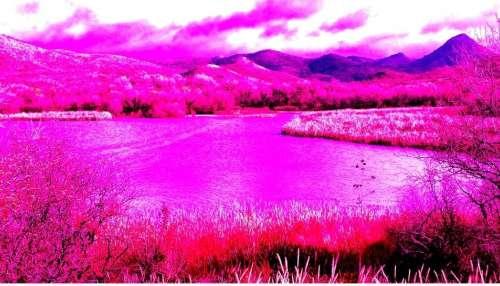 Pink Pollution: ஏரிகள், ஆறுகள், மரங்கள் என எங்கும் 'இளஞ்சிவப்பு' நிறம்