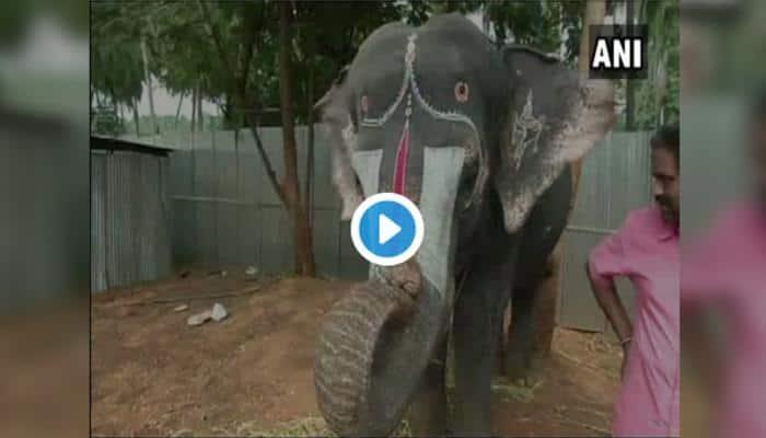 ViralVideo: மவுத்ஆர்கன் வாசிக்கும் யானை!