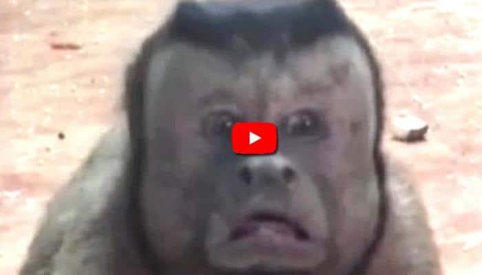 Video: இணையத்தை கலக்கும் மனித-முக குரங்கு!