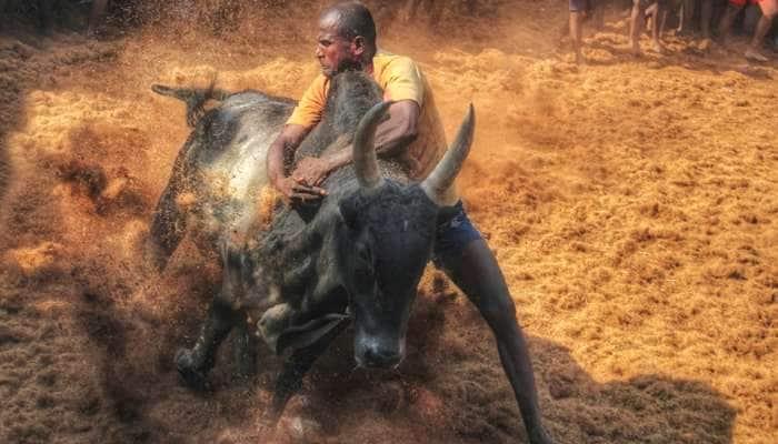 கோலாகலமாய் துவங்கியது மதுரை அவனியாபுரம் ஜல்லிக்கட்டு.....