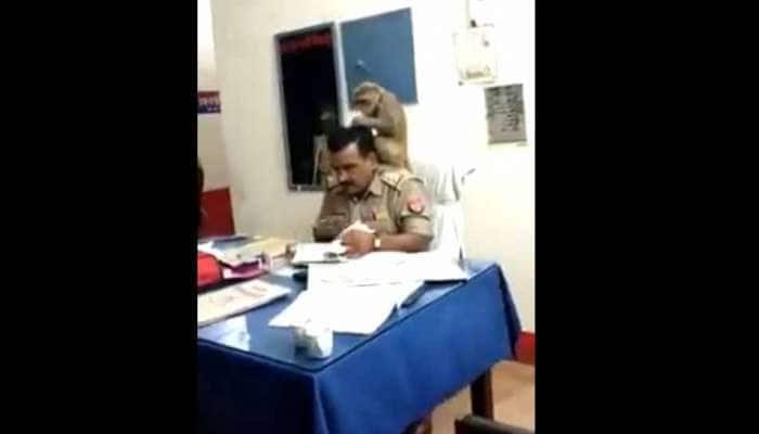 Watch: காவல் ஆய்வாளருக்கு இலவச ஹேர் மசாஜ் செய்யும் குரங்கு..!