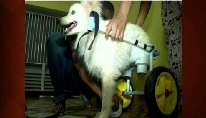அடிபட்ட நாயை தத்தெடுத்து அதற்காக Special Wheel Chair-ஐ உருவாக்கிய கோயம்பத்தூர் தந்தை மகள்