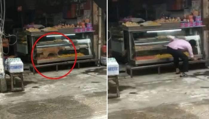 Watch Video: இனிப்பு கடையில் புகுந்த நாய், கடைக்காரர் செய்ததை பாருங்கள்