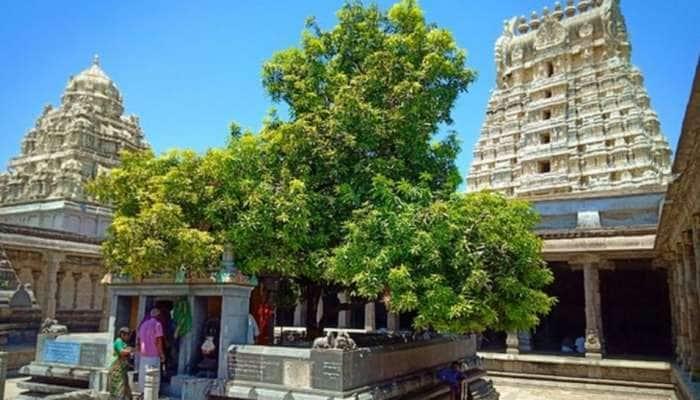 Spiritual Trees: தல விருட்சம் பற்றிய சுவாரசியமான தகவல்கள், 8 புனித மரங்கள் கொண்ட கோவில் எது?