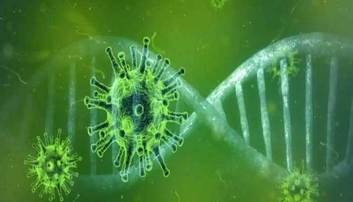 Green Fungus: பச்சை பூஞ்சை நோய் உறுதி; அறிகுறிகள் என்ன