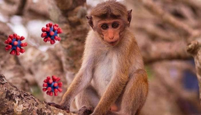China: இன்னும் கொரோனாவே முடியவில்லை; அதற்குள் பீதியை கிளப்பும் Monkey B வைரஸ்