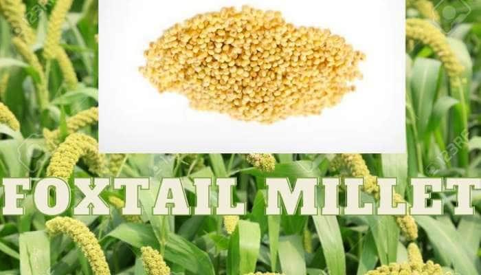 Foxtail millet: ஆரோக்கியமான வாழ்வுக்கு அஸ்திவாரம் போடும் தினை மலட்டு தன்மையை நீக்கும்