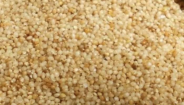 Little Millet: அடடா, சாமையில் இத்தனை நன்மைகளா? தெரியாம போச்சே!