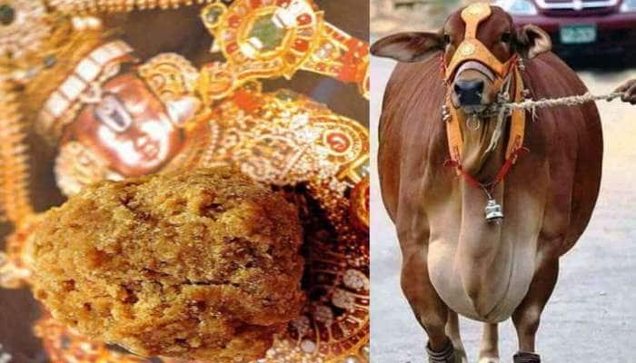 Tirupati: திருப்பதி கோவிலுக்கு 300 மாடுகள் தேவையாம்! காரணம் தெரியுமா?