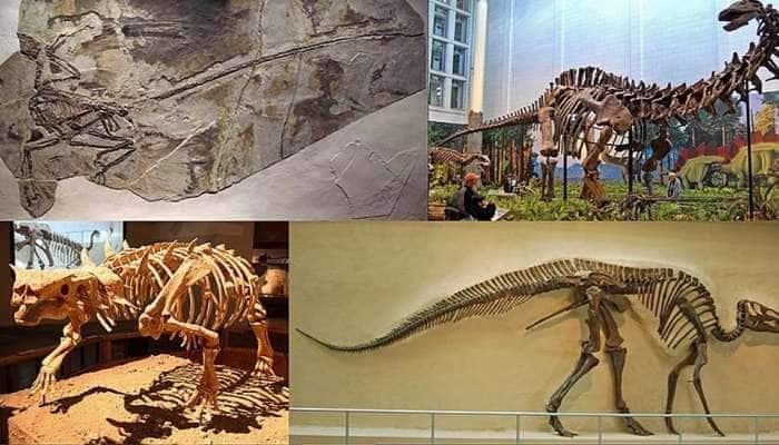Dinosaurs: நீல திமிங்கலம் போன்ற பிரம்மாண்டமான டைனோசர்களின் புதைபடிமங்கள் சீனாவில் கிடைத்தன