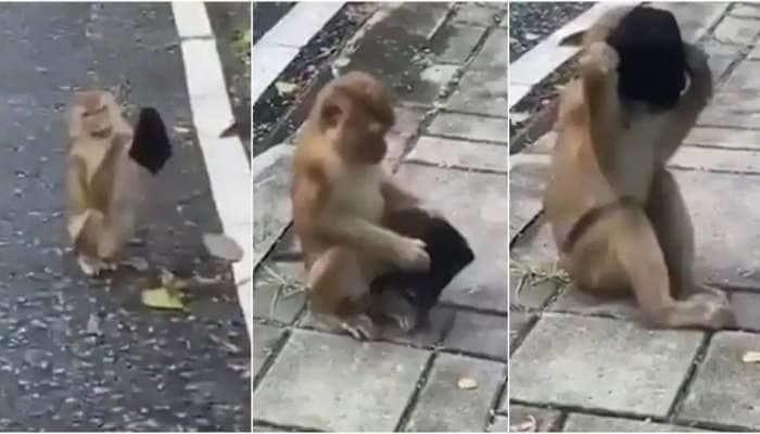 Corona vs Monkey: மனிதர்களை விட சூப்பராக முகக்கவசம் அணியும் குரங்கு வீடியோ வைரல்