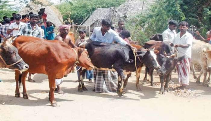 Cattle Care: கால்நடைகளுக்கு கோமாரி நோய் தடுப்பூசி போடும் பணி நாளை உதகையில்  தொடங்கும்